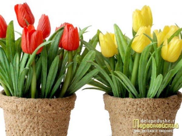 Тюльпаны. новости магазина семян в самаре.